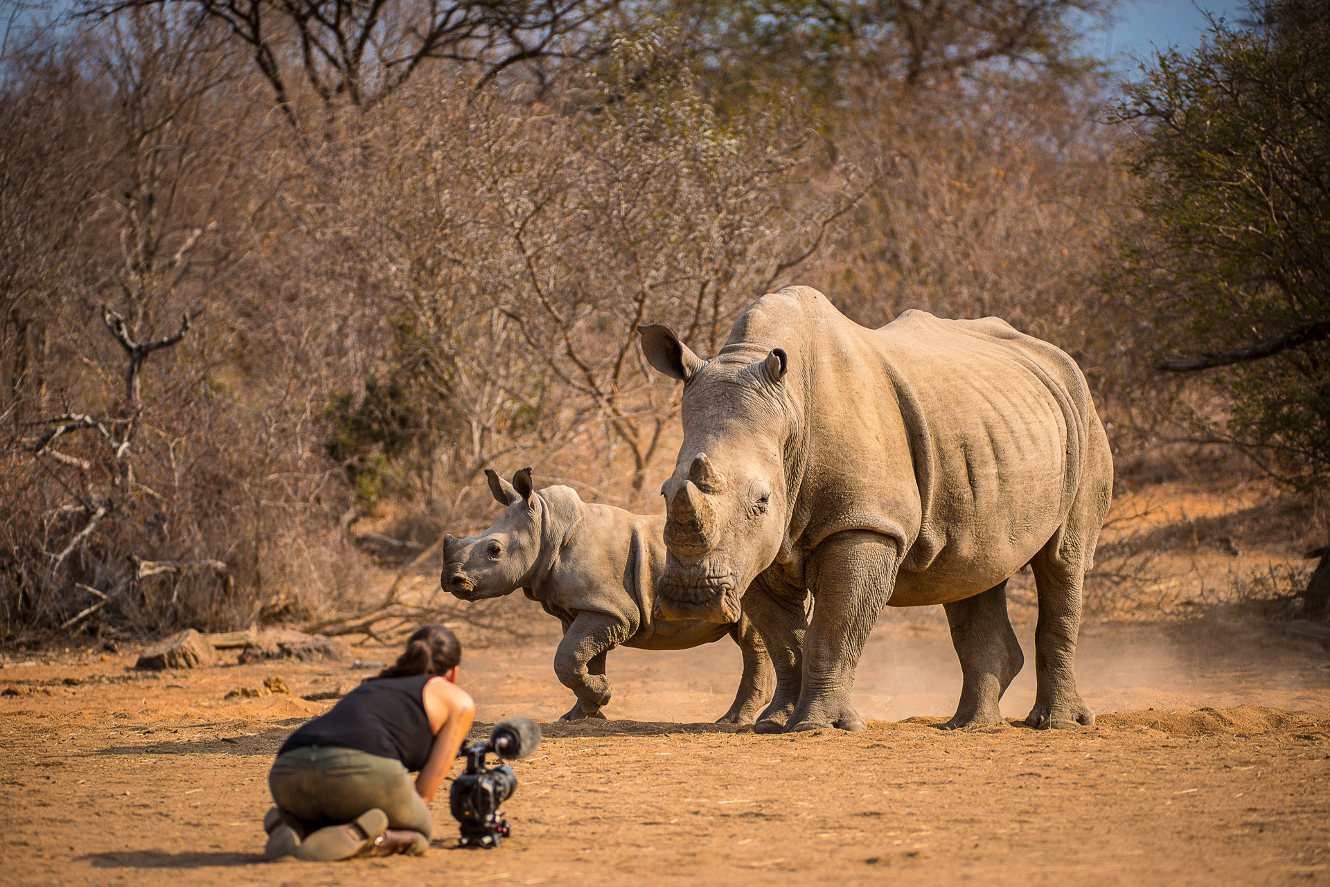 Image of Shannon Benson filming rhinos by Russell MacLaughlin